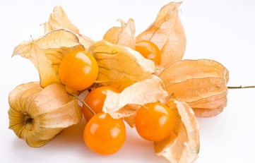 Physalis pubescens L